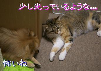 blog20150824-2.jpg