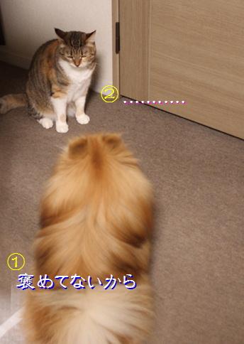 blog20150824-5.jpg