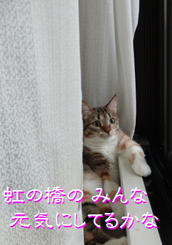 blog20150909-2.jpg