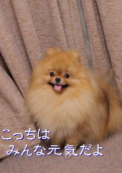 blog20150909-3.jpg