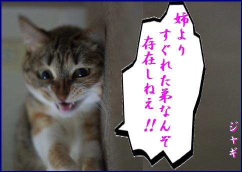 blog20150911-5.jpg
