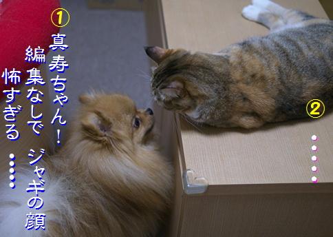 blog20150911-8.jpg