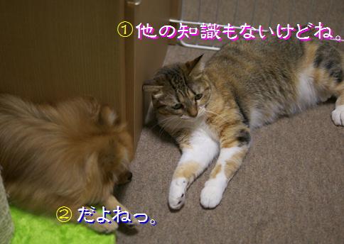 blog20151015-4.jpg
