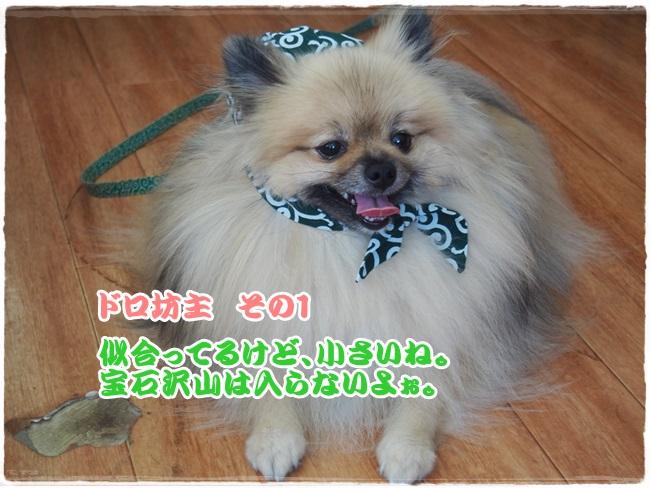 P9051487.jpg