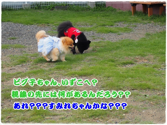 P9051670.jpg