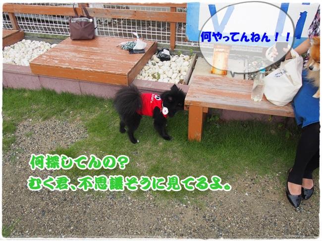 P9051681.jpg