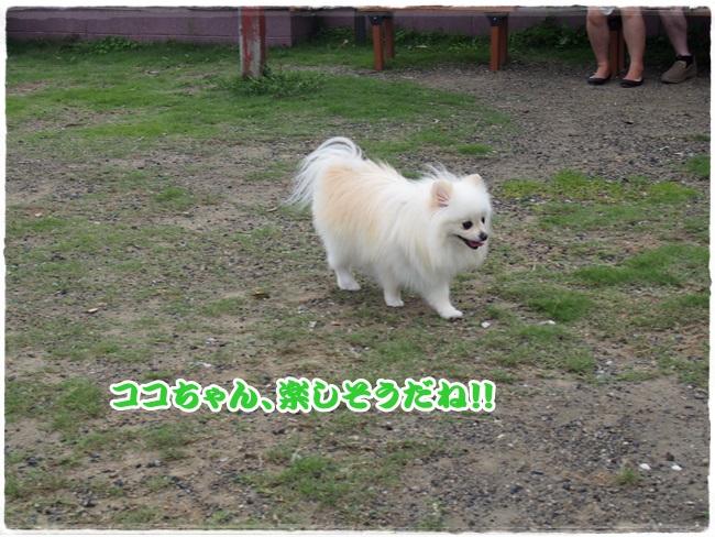 P9051807.jpg