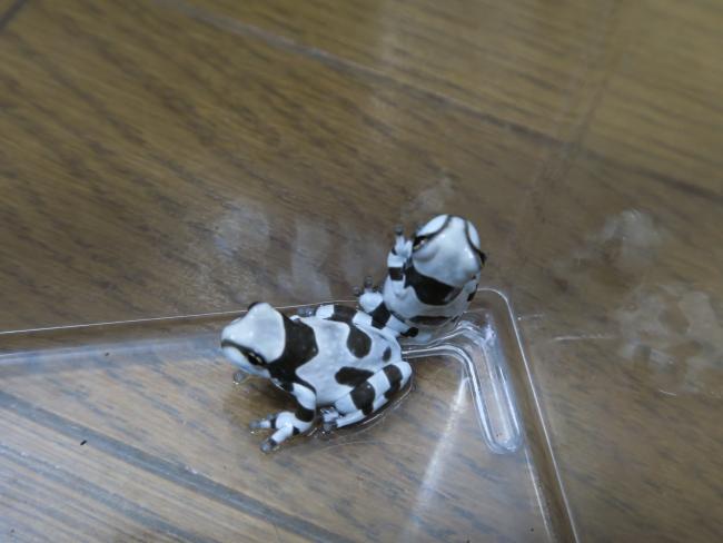 G7X4 2015-09-01 070