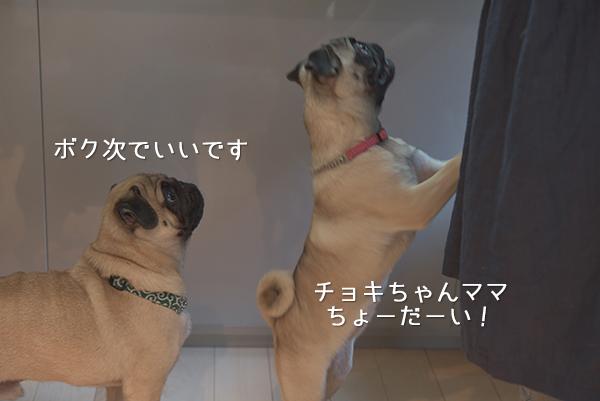 チョキちゃんママちょーだい!