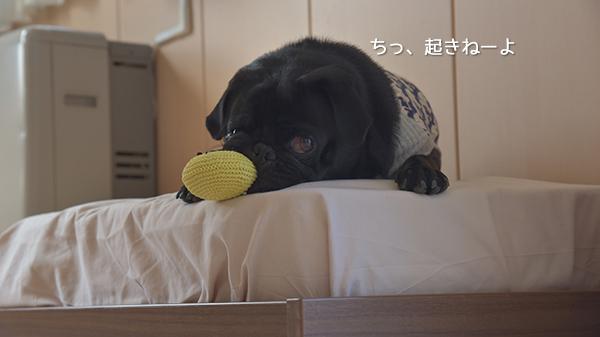 ちっ、起きねーよ