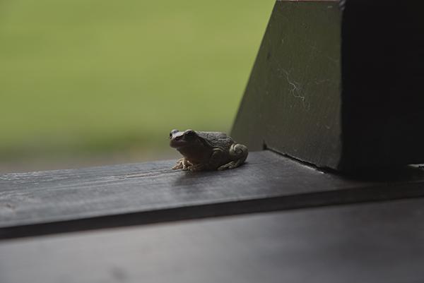 カエルなお客様