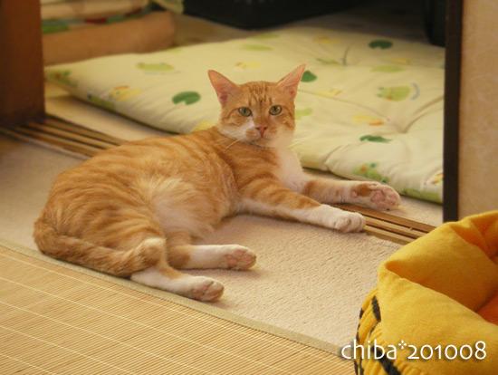 chiba15-09-04.jpg
