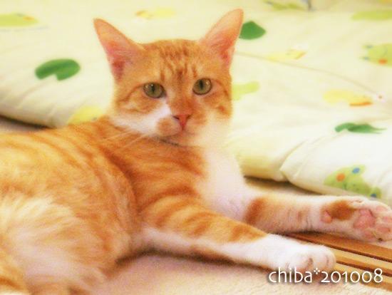 chiba15-09-05.jpg