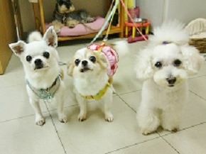犬のお店パピーズ