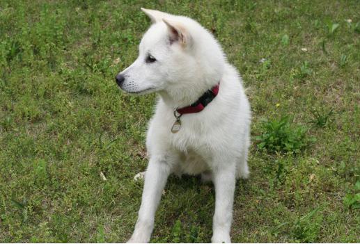 紀州犬ミリオン