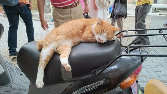 道後の猫ちゃん6