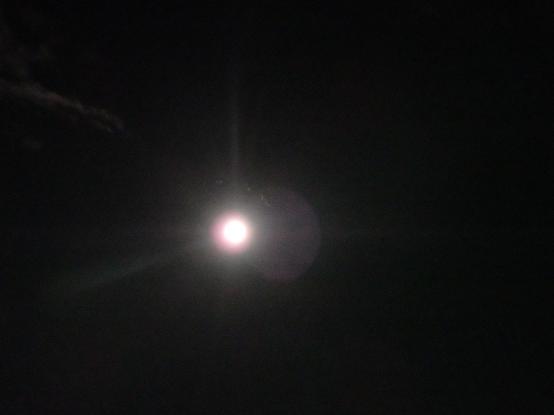 中秋の名月11(9月27日猫ちゃんママ撮影)
