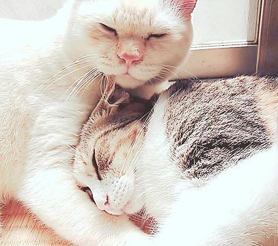 日だまりで、アータロウ君に抱かれて眠るききちゃん。ポカポカ、スヤスヤ(=^・^=)おやすみニャ~2