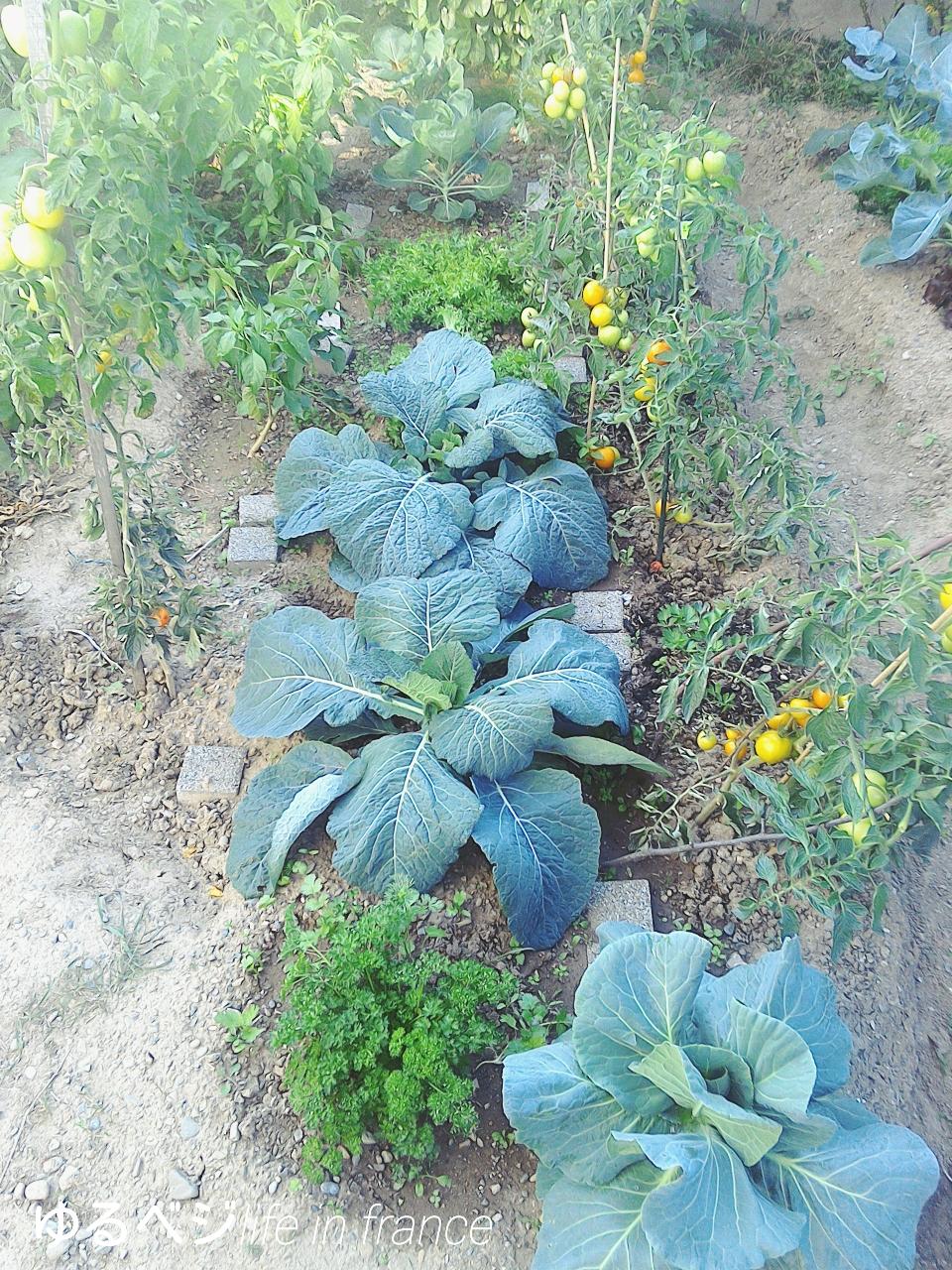 garden20150909①
