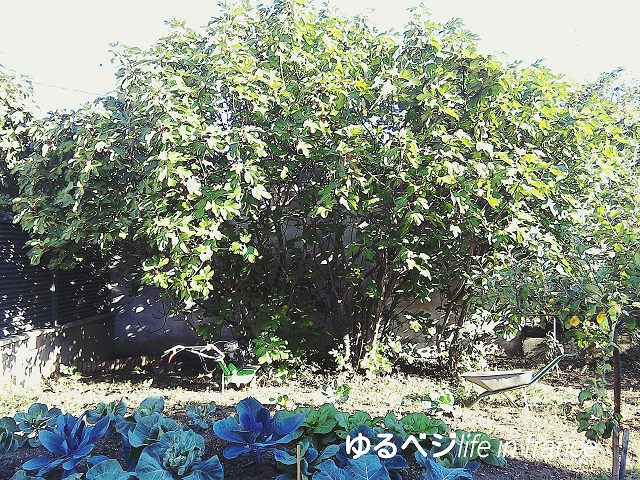 figs20150921①