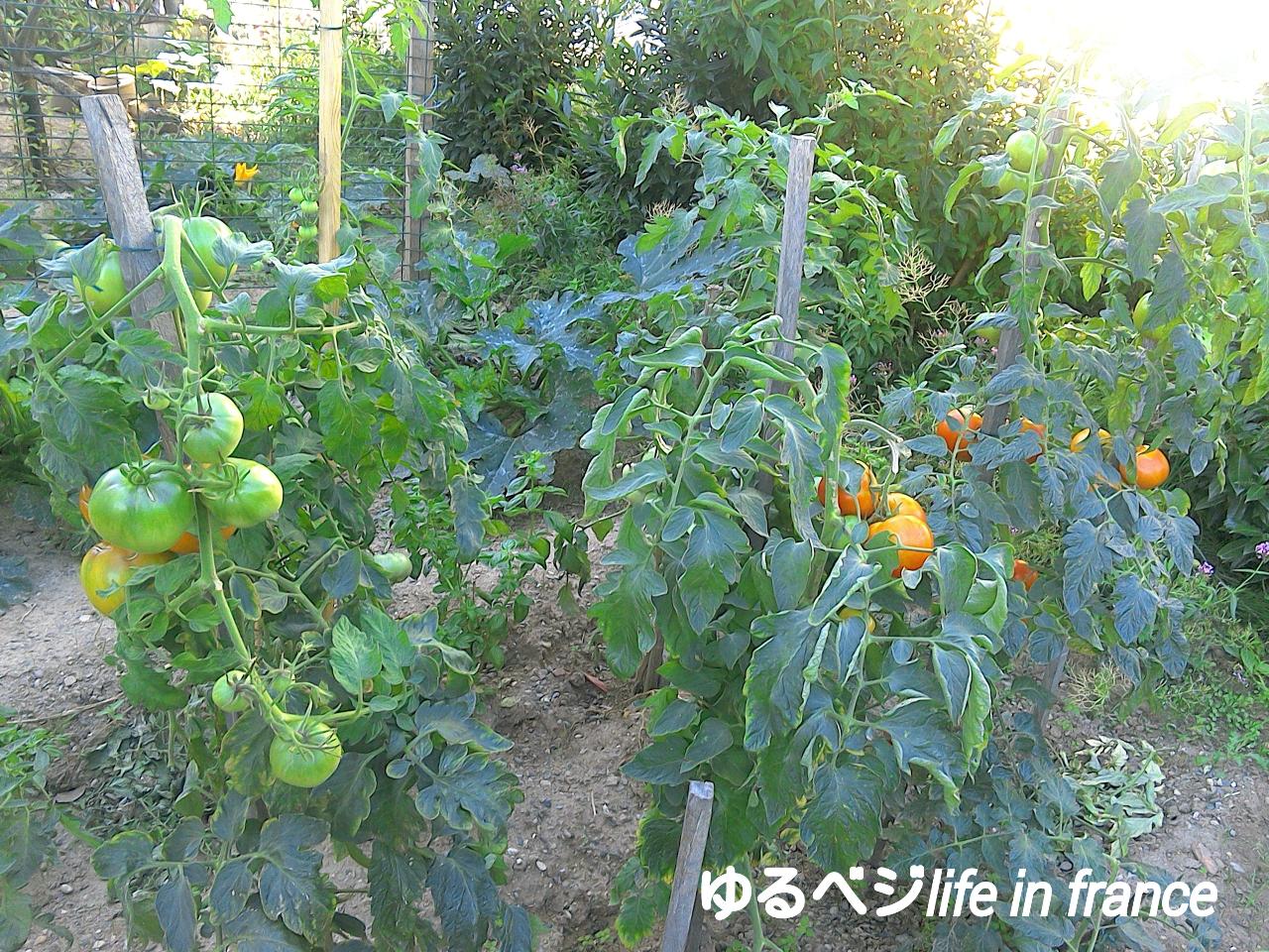 tomato0830.jpg