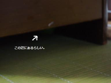 P9021124.jpg