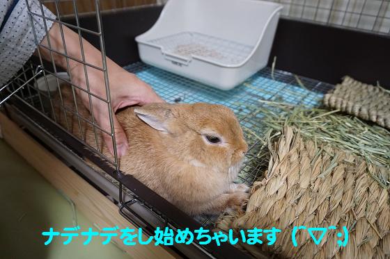 ぴょん子150831_05