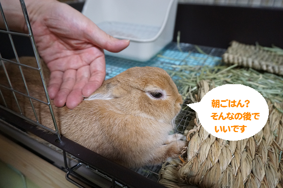 ぴょん子150831_06