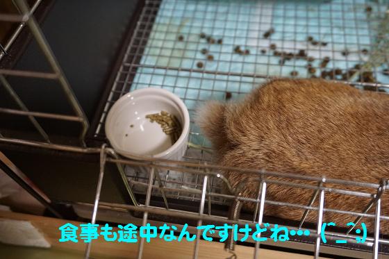ぴょん子150831_03