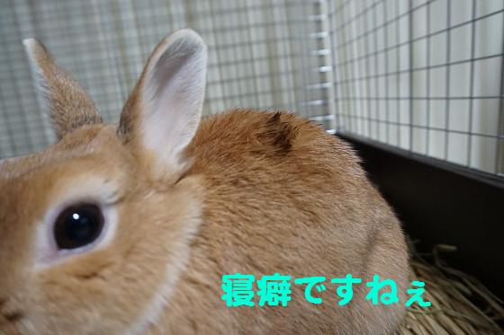 ぴょん子151008_03