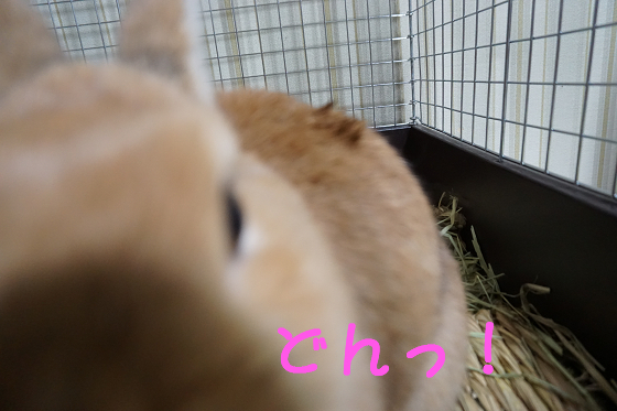 ぴょん子151008_04