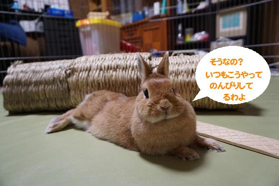 ぴょん子151013_03