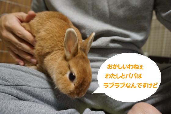 ぴょん子151013_04