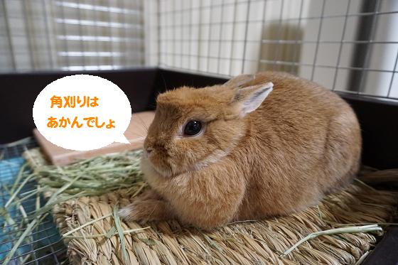 ぴょん子150824_08