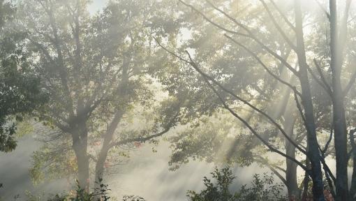 0773霧が谷1510142