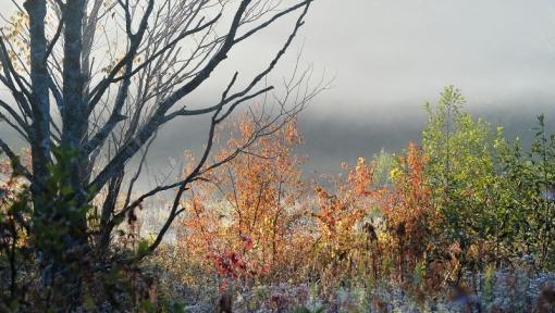 0778 霧が谷1510143