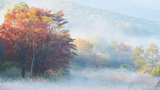 0800霧が谷1510144