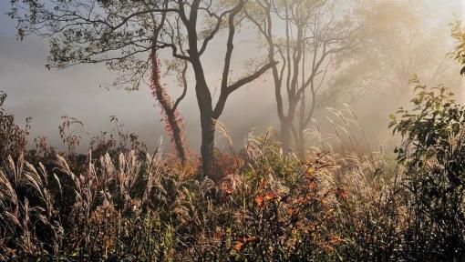 4750霧が谷1510149