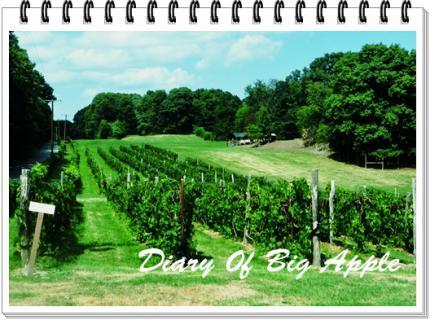 wine用のグレープ畑