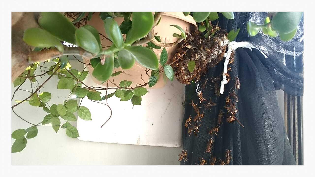 ミツバチの巣発見