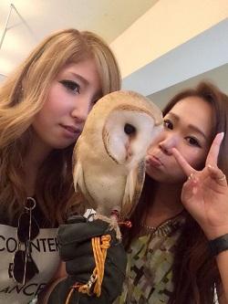 owl8211.jpg