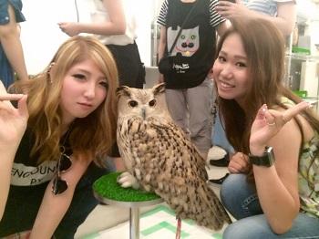 owl8212.jpg