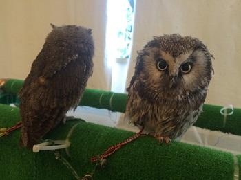 owl8213.jpg
