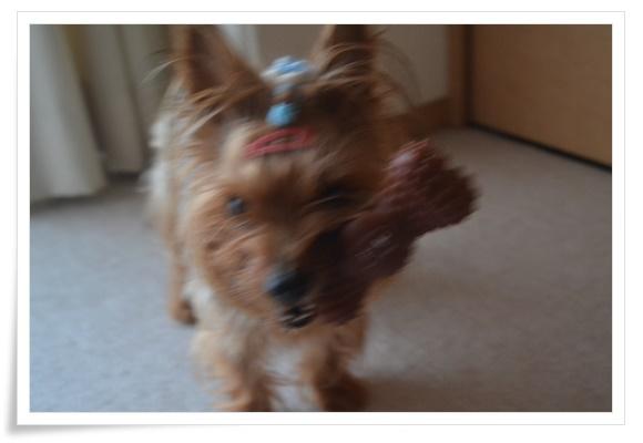 初めてのおもちゃDSC_0026-20150821