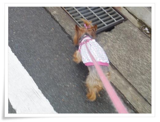 散歩IMGP3426-20150901