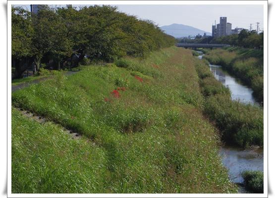 お散歩IMGP3670-20150929