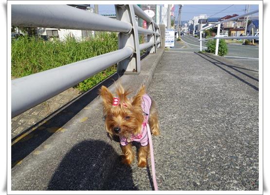 お散歩IMGP3680-20150929