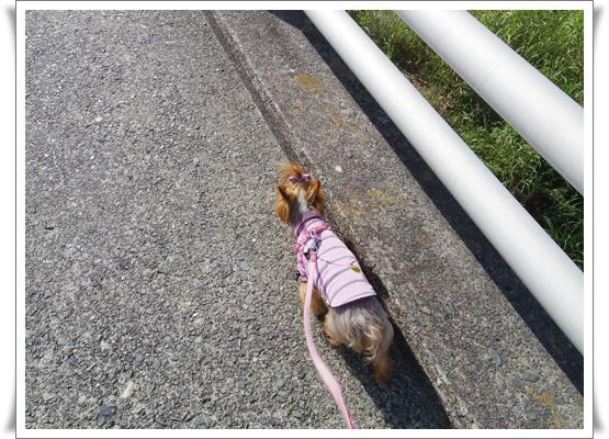 お散歩IMGP3681-20150929
