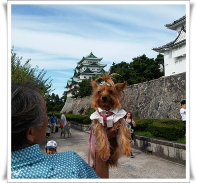nagoyaIMG00222-20150919.jpg