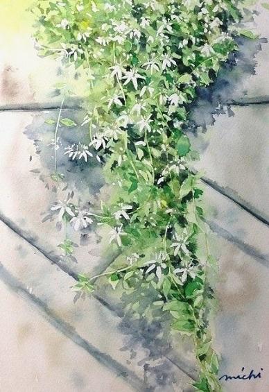 しろい花C201509